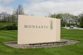 jobs in st louis mo monsanto cutting 2 600 jobs in restructuring as corn sales slide