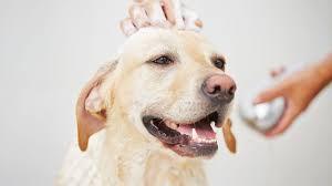 20 Great Dog Walks Around Sydney And Central Coast Australian Mobile Dog Washing U0026 Grooming Jim U0027s Dog Wash 131546