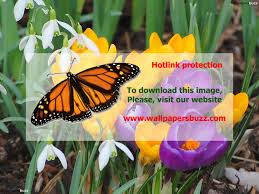 fresh free pictures of spring flowers and butterflie 23215