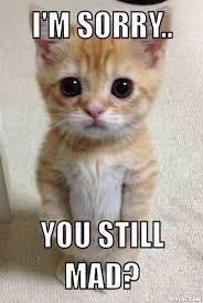 U Still Mad Meme - i m sorry gifs pinterest memes and cat