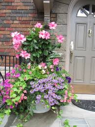 summer container with pink mandevilla wave petunias calibracoa