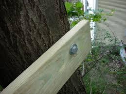 zipline insanity zipline tree platform