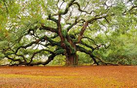 23 photos of the world s most beautiful trees atchuup cool