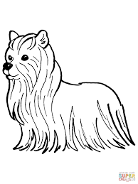 yorkie coloring page free download