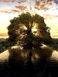 the tree of happy arbor day top 10 awesome trees time