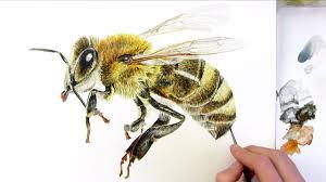 paint realistic honey bee watercolor