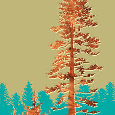 douglas fir tree douglas fir tree forest print jefdesigns