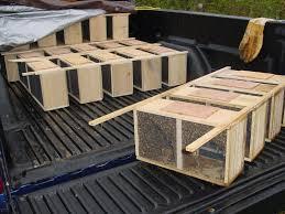 about city bee savers finding saving u0026 breeding local honey bees