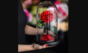 wholesale flowers plants and florist supplies to uk ireland van