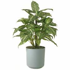indoor flowering plants indoor flowering plants low light best indoor house plants and how