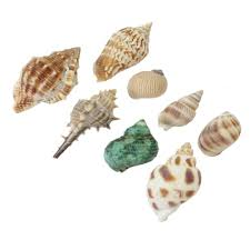 100 shells decorations home 35 best diy shell projects