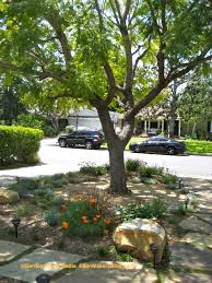 front yard landscaping trees the garden inspirations