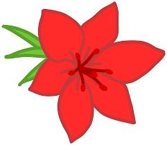 100 big red flower flower wallpaper free large red flowers