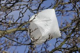 california becomes state to ban disposable plastic bags