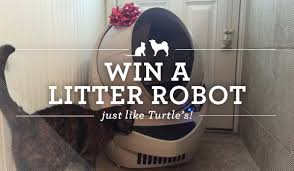 litter robot black friday enter to win a litter robot on december 20th