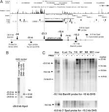Ucsc Map The Inducible Tissue Specific Expression Of The Human Il 3 Gm Csf