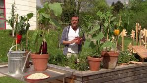 gem se pflanzen balkon gemüse für den balkon orf salzburg fernsehen