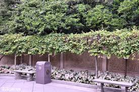 landscaping the world epcot part two the u201cworld u201d according to