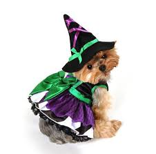 Scary Witch Halloween Costumes 96 Howl Ween Costumes Images Pet Costumes