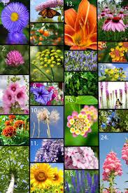 best 25 the butterfly garden ideas on pinterest the butterfly