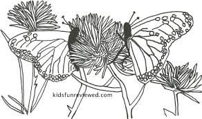 butterfly coloring pages the kid u0027s fun review