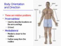 Human Anatomy Martini Anatomy Intro Language Of Anatomy Chapter 1 Language Of