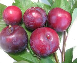 plum trees product categories just fruits and exotics