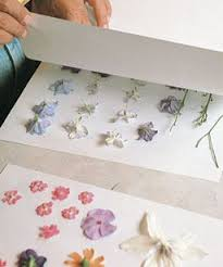 Drying Flowers In Books - 17 best images about nature study on pinterest pressing flowers