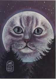 164 best moon cats images on cat cats and