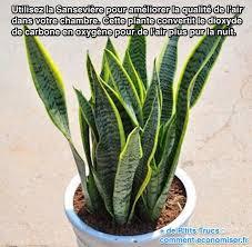 plante dans chambre les plantes depolluantes purifier l air de la maison maison