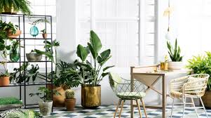 indoor planting planting with style ways to style your potted plants