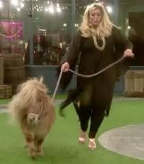 Gemma Collins Memes - cbb fans go wild for gemma collins birthday treat tony the pony