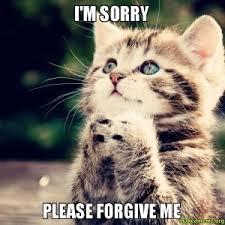 Sorry Memes - 11 purrfect i m sorry memes random funny cat