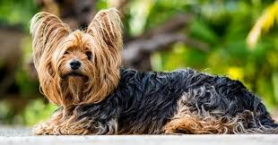 what is the best dog food for my small dog