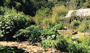 a vegetable garden without digging gawler org