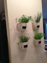 indoor herb garden hello i live here