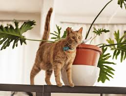 nine commercial cat repellents for indoor and outdoor