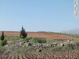 plant sale u2013 alta peak bekaa valley quentin sadler u0027s wine page