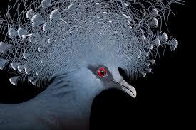 Birds images Birds jpg