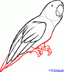 drawn parrot easy pencil and in color drawn parrot easy