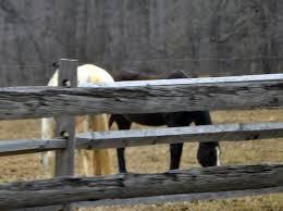 horse rescue chestercountyramblings