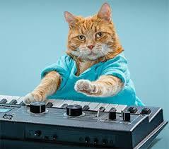 Keyboard Cat Meme - the life and times of keyboard cat everyone s favorite fail meme