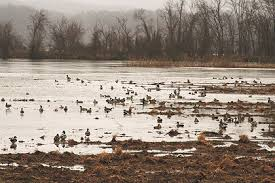 Floating Duck Blinds Photos Tennessee U0027s Other Duck Mecca