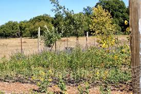 texas native plants nursery rock oak deer medina garden nursery for texas native plant week