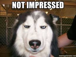 Unimpressed Meme - not impressed unimpressed dog face meme generator