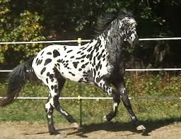 omg this is one of the most beautiful horses i have ever seen