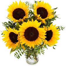 sunflower delivery radiant sunflower radiant sunflower delivery in germany