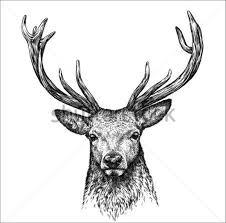 9 animal sketches free u0026 premium templates free u0026 premium