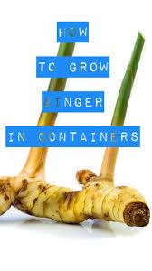 106 best container gardening images on pinterest garden ideas
