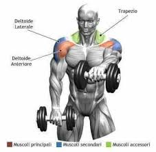 Incline Bench Muscle Group Pin By Ken Calbi On Exercise Pinterest Fitness Workout And